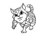Dibuix de Gat salvatge euroasiàtic per pintar