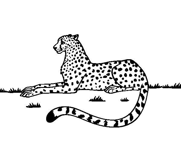 Dibuix de Guepard en repòs per Pintar on-line