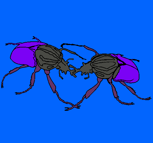 Dibuix Escarabats  pintat per gerog