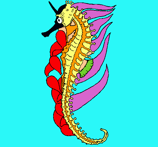 Dibuix de Cavallets de mar per pintar