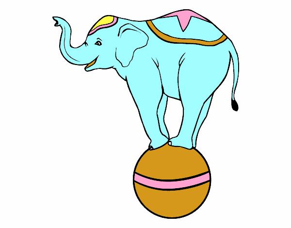 Elefant equilibrista