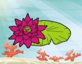 Una flor de lotus